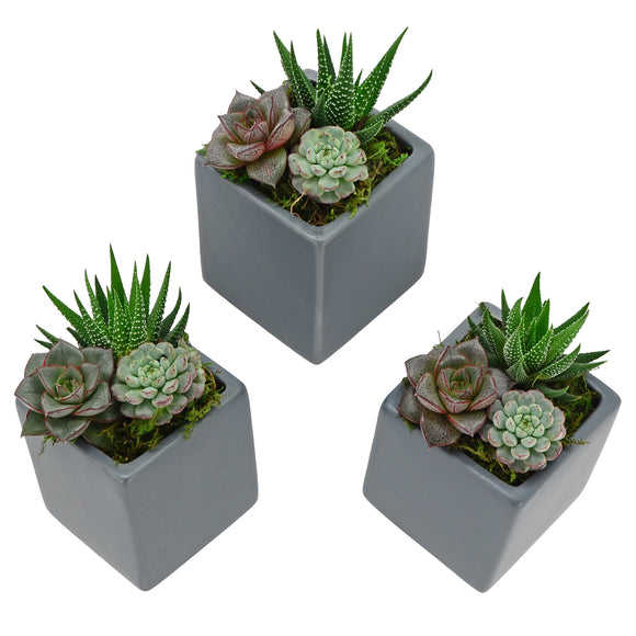 Cube Wall Planter 3-Pack, Matte Series