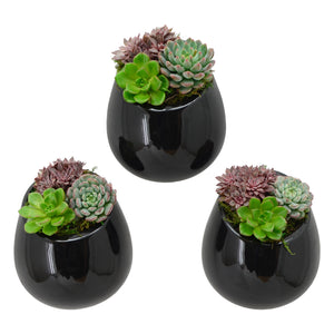 Round Wall Planter 3-Pack, Glossy Series