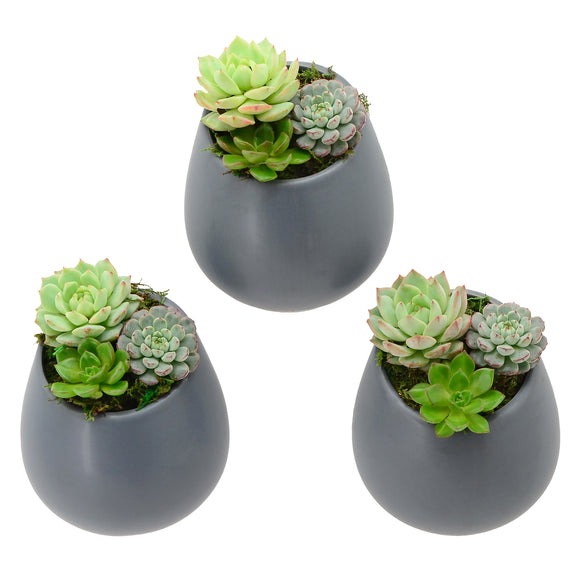 Round Wall Planter 3-Pack, Matte Series