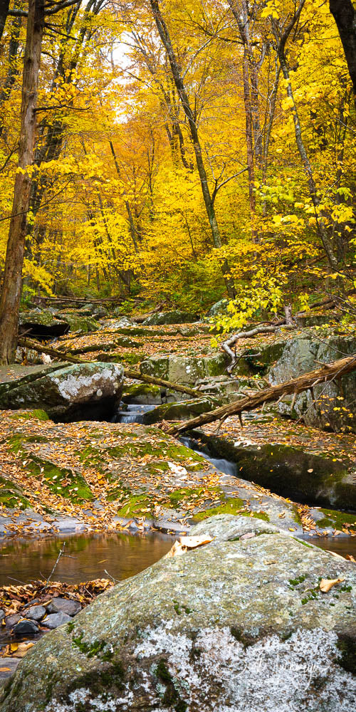 Fall at Dark Hollow Tall Fine Art Landscape Photography Print - Turnmeyer Galleries