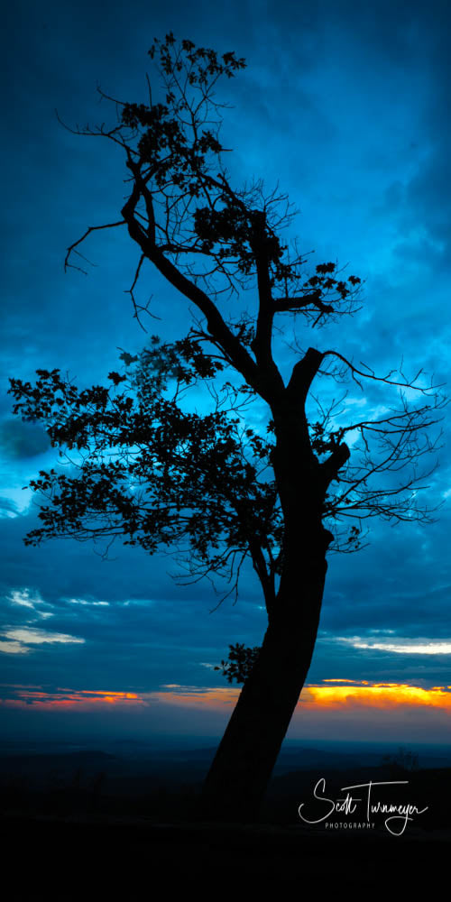 Blue Tree Fine Art Landscape Photography Print - Turnmeyer Galleries