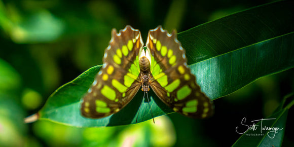 Butterfly Fine Art Wildlife Photography Print - Turnmeyer Galleries