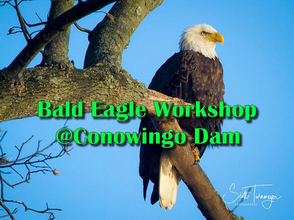 Bald Eagle Photography Workshop at Conowingo Dam - Turnmeyer Galleries