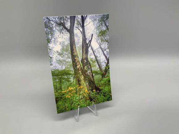 Dark Hollow Trees Postcard - Turnmeyer Galleries