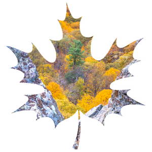 "Fall Foliage Leaf Decal - 3"" - Turnmeyer Galleries"
