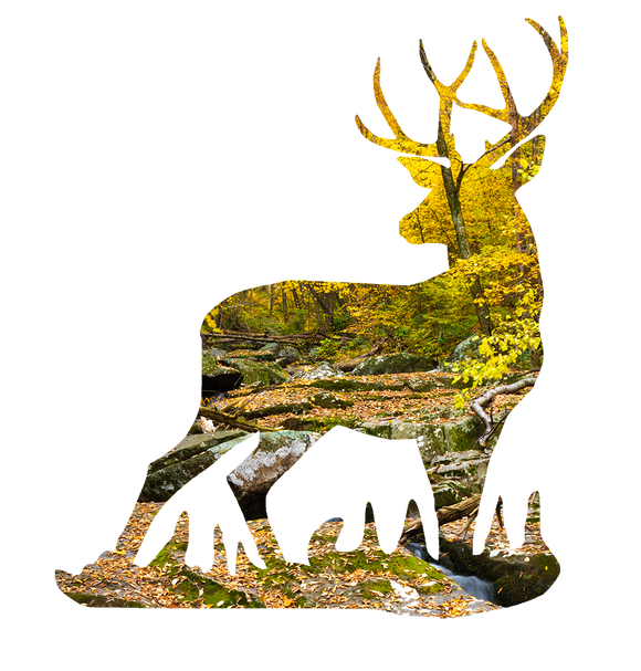 Fall Woodland Deer Sticker Decal