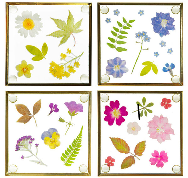 Sass & Belle Pressed Flowers Coaters