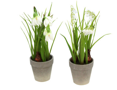 Gisela Graham Snowdrops / Lily of the Valley in Pot