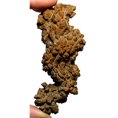 Coprolite (fossil poop) 3-4 inch