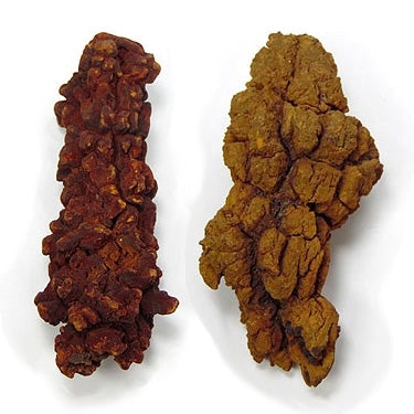 Coprolite medium