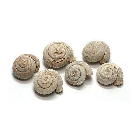 Gastropod (snail shell) Fossils 4-pack