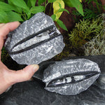 #ORT-10C Orthoceras Fossil 4-4.5 inch