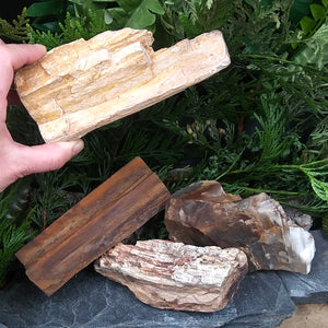 #PW-105B Petrified Wood from the Pacific Northwest
