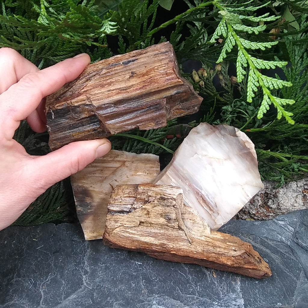 #PW-106B Petrified Wood from the Pacific Northwest