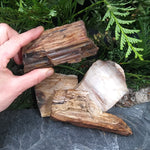 #PW-106C Petrified Wood from the Pacific Northwest