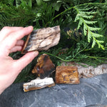 #PW-107B Petrified Wood from the Pacific Northwest