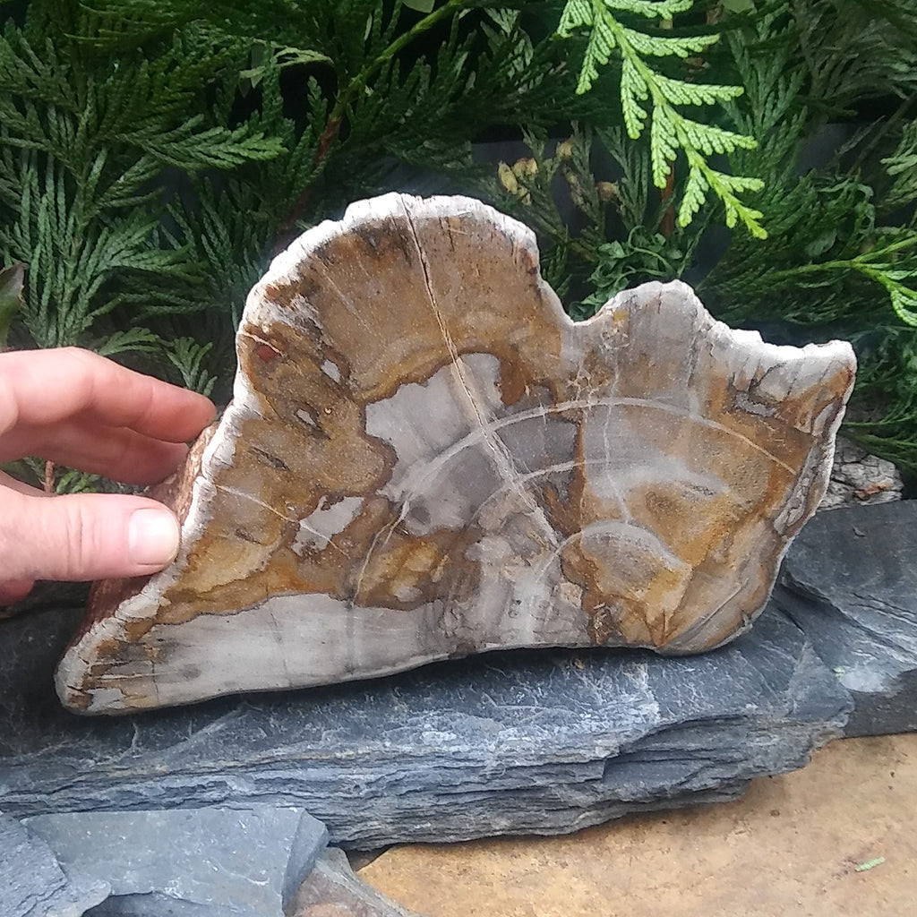 #PW-109 Petrified Wood from Indonesia