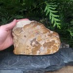 #PW-110 Petrified Wood from Indonesia