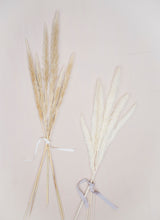 Load image into Gallery viewer, Baby Pampas Grass