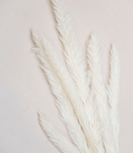 Baby Pampas Grass