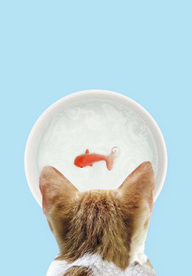 SUCK UK Goldfish Pet Water Bowl