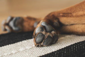 (3) Ways to Protect Your Precious Pooch's Paw Pads
