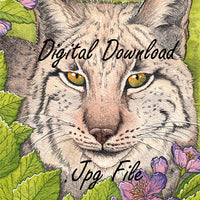 Digital File - Iberian Lynx Wild Cat Color Painting Printable Clip Art Download