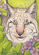 Kimberly Crick Iberian Lynx Animal Artists Collective watercolor painting