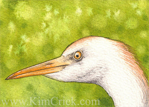 Original Art Watercolor Painting Cattle Egret Portrait