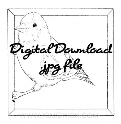Digital File - Goldfinch Bird Line Art Drawing Printable Coloring Book Page Download