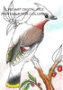 Digital File - Bohemian Waxwing Bird Line Drawing Digi Stamp Printable Jpg Download