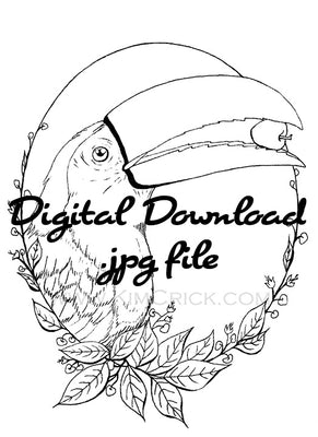 Digital File - Toucan Tropical Bird Printable Clip Art Animal Coloring Book Page Line Drawing