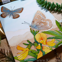 Original Art Watercolor Painting Xerces Blue Butterfly (Not a Print, Supports Xerces Society Conservation)