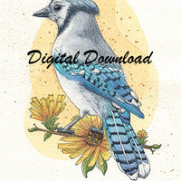Digital File - Blue Jay Bird Color Painting Printable Clip Art Download