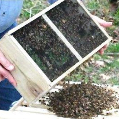 Gift Card Package Bees PICK UP