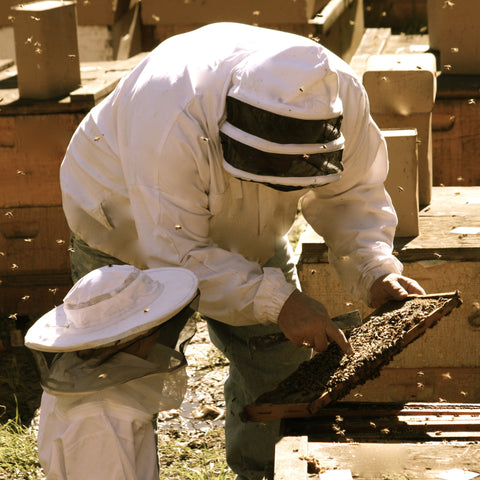 One Hour of Private Beekeeping Lessons