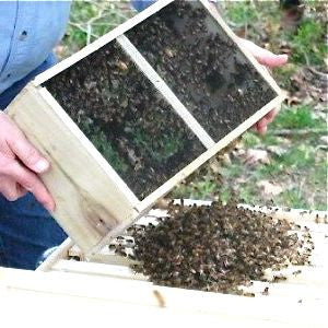 Package CA Bees 3 pounds WITH SHIPPING