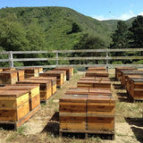 Single Story Beehive with CA Bees PICK UP