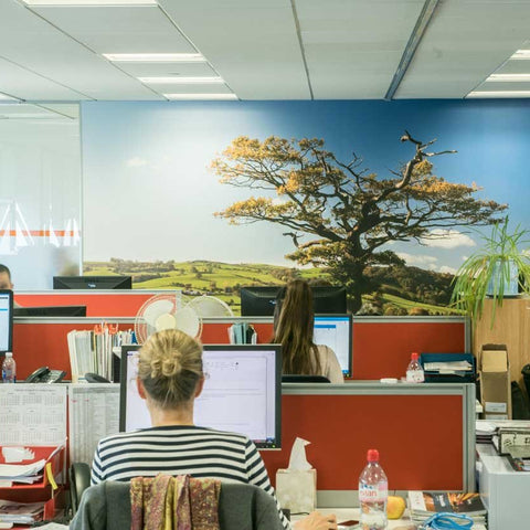 British Hills wall mural in an office environment