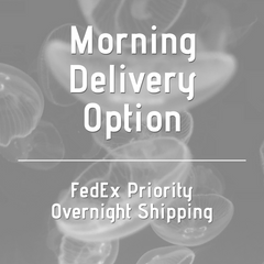 Morning Delivery Upcharge