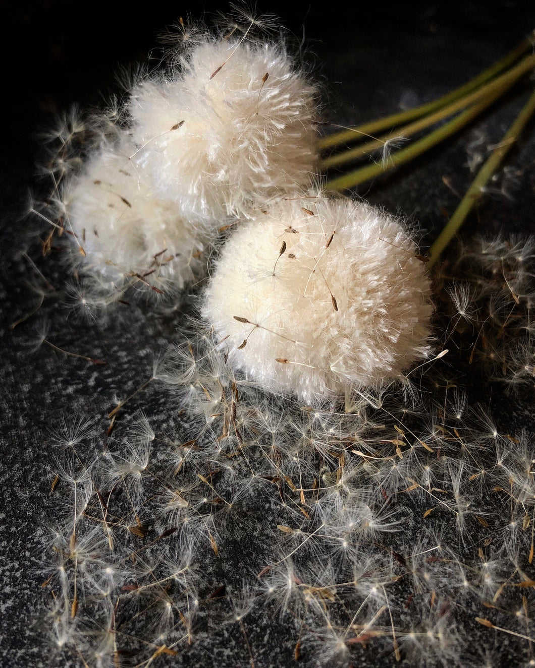 {Mohair} Dandelions | Notecards