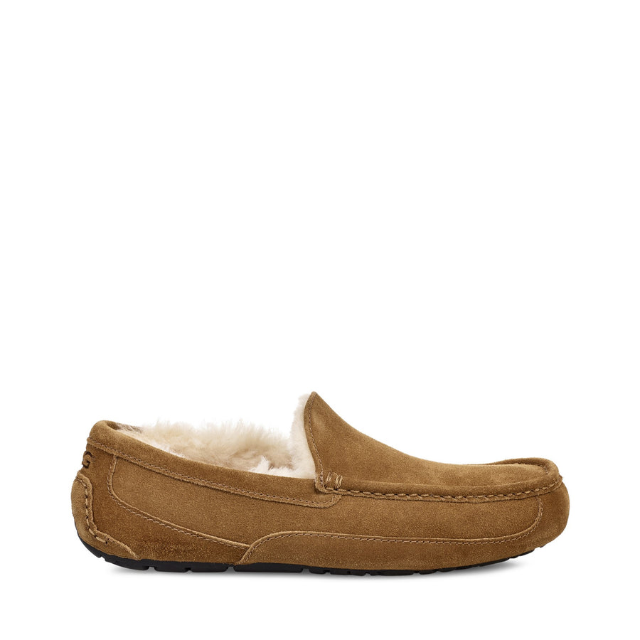 Men's UGG Ascot in Chestnut