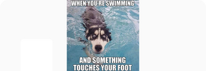 Something Touches Your Foot