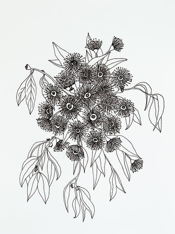 The Face Of A Flowering Gum - Botany Lane Prints by Kate Durham