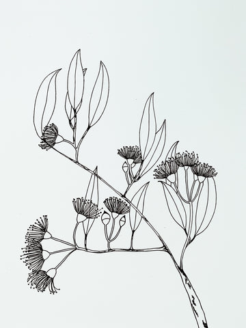 Flowering Gum Branch - Botany Lane Print by Kate Durham