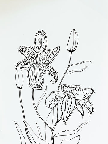 Lilies - Botany Lane Prints by Kate Durham