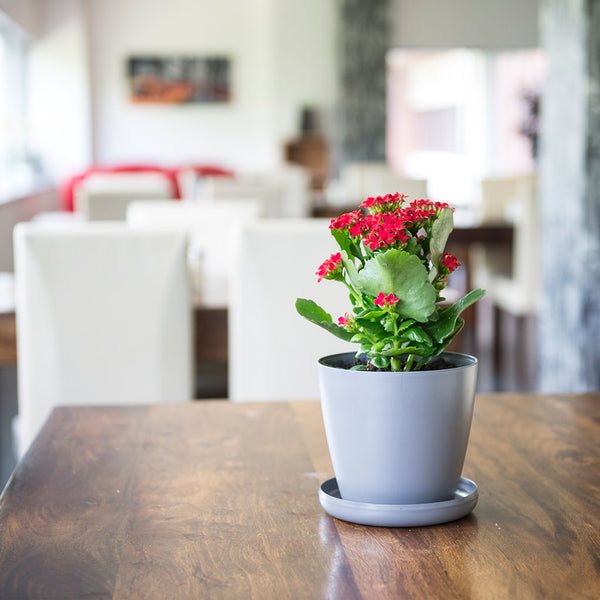 Grey ECO Potagator pot with red plant in dining setting