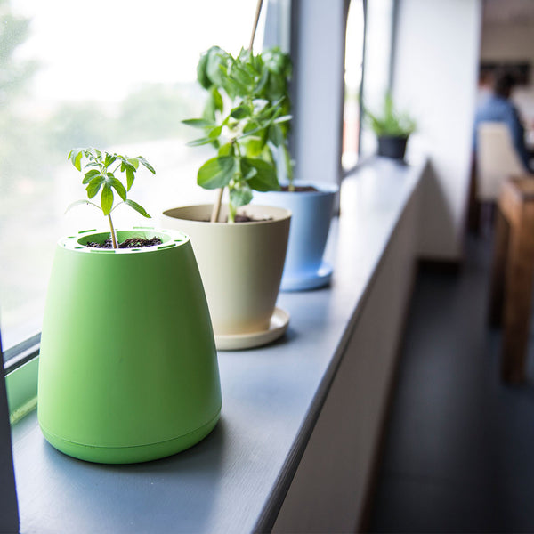 Green, Beige and Blue ECO Potagator Pot with plants on window sill