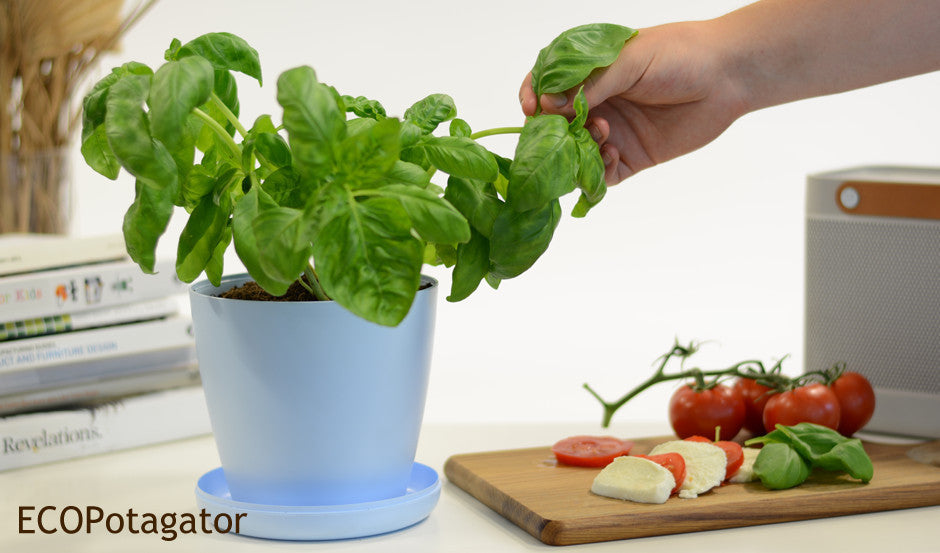 Blue ECO Potagator Pot with sweet basil and tomato and mozarella salad