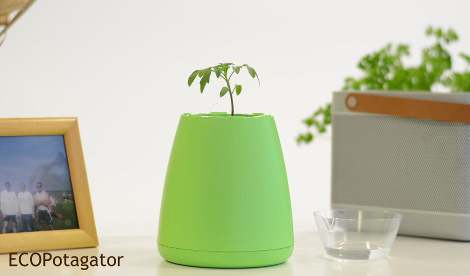 Green ECO Potagator Pot with a tomato in seedling growth stage
